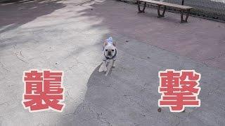 意外と便利な場所にあった駒沢公園のドッグランに通って数ヶ月。犬との...