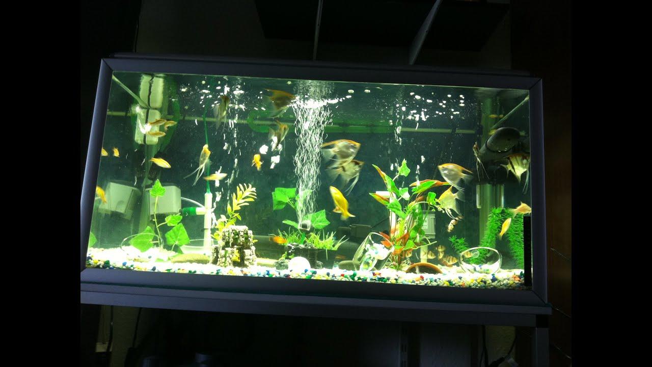 Video No 5 Diy Undergravel Aquarium Filtration Crystal