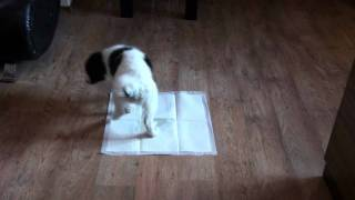 Puppies Pet Training Pads - Pheromones Scented To Attract Puppies