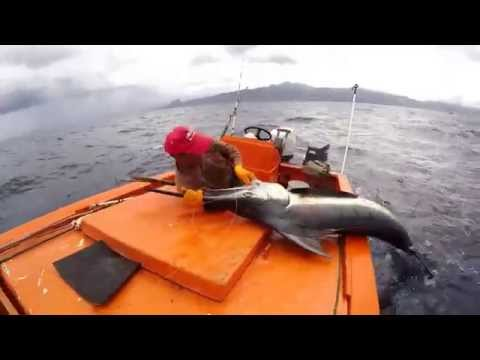 Blue Marlin catch, Dominica, Caribbean West Indies