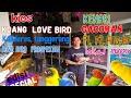 Survai Kios Koang Love Bird Berbagai Jenis Kenari Bahan Dan Gacoran  Mp3 - Mp4 Download