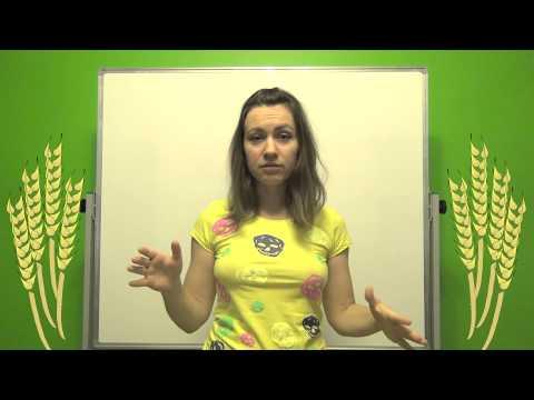 Агробизнес: выращивание ржи