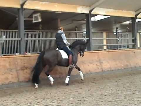 Edward Gal training Moorlands Asther de Jeu feb 2011