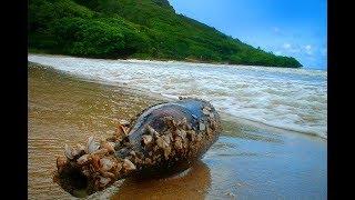 ЭТО нашли на необитаемом острове! Денежная яма на острове Оук. Какие ещё тайны там скрываются!