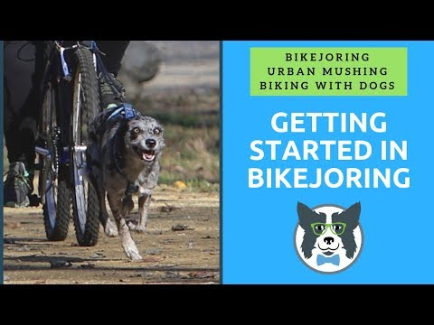 Bikejoring Equipment And Getting Started