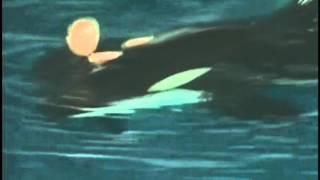 Нападение кита-касатки на дрессировщика