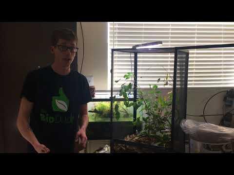 How to create a Chameleon Bioactive Terrarium