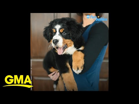 A North Carolina funeral home gets an adorable new member l GMA Digital