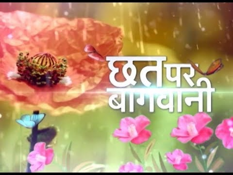 छत्त पर बाग़वानी - Winter vegetables in Terrace Garden Promo