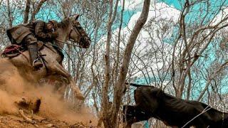 Cavalo malandro toada(mimin do gado)
