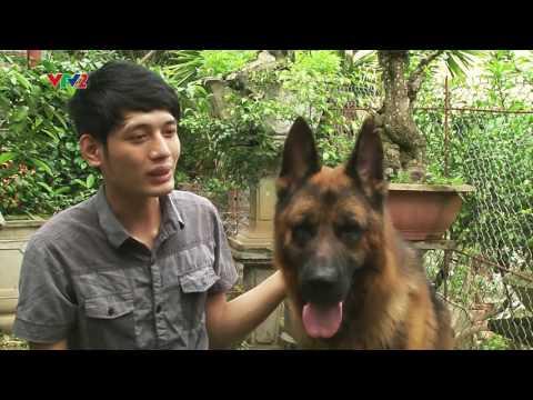 Phóng Sự Trại Chó Becgie Đức Sơn Tây trên truyền hình