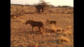 Кения / Экватор / Национальный парк Самбуру и Накуру