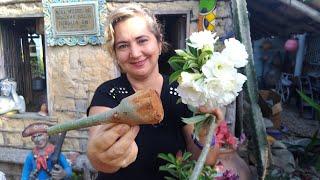 Como Fazer Poda Radical de Caudex em Rosa do Deserto