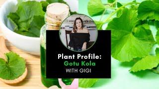 Plant Profile: Gotu Kola