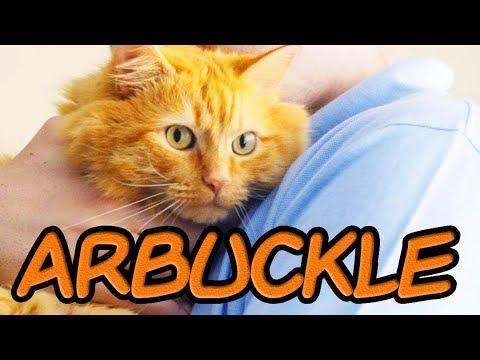 arbuckle:-a-garfield-fan-film