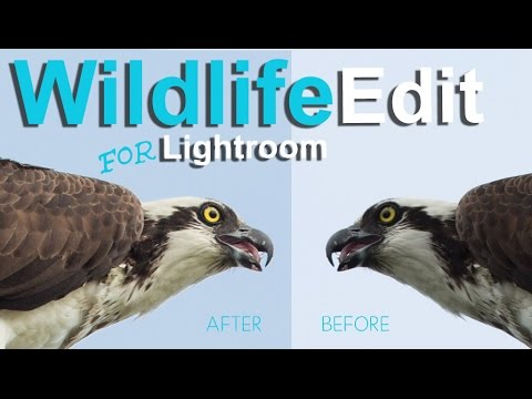 Editing Wildlife in Lightroom