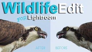 Editing Wildlife in Lightroom