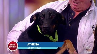 Adopt These Pups From Barc Shelter in Brooklyn | The View
