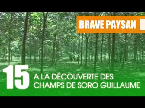 BRAVE PAYSAN / A la découverte des Plantations de Soro Guillaume ( 1ere partie )