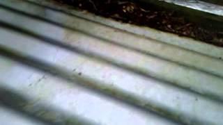 Corrugated Iron Cleaner