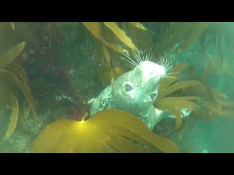 Diving with the seals off St Abbs, September 2016