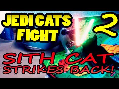 Jedi Cats Fight 2. Sith Cat Strikes Back
