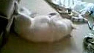 Siberian Husky Going Crazy