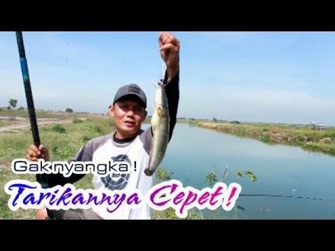 Bikin GEREGETAN !! Mancing ikan LELE Di sungai !