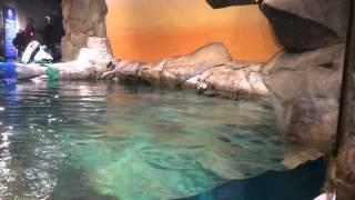 アトランタの水族館にてラッコさん See otters in Georgia Aquarium