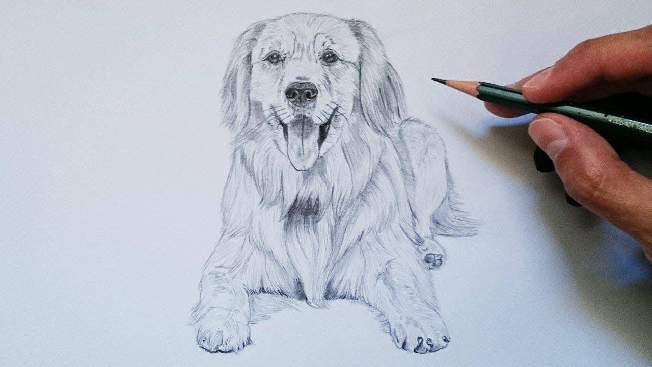 Dibujos de animales a lapiz o carboncillo - Página 3 Maxresdefault