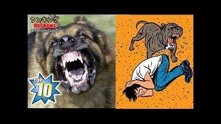 【飼いやすい筈がない】犬の性格で凶暴な犬種ランキングベスト10!初...