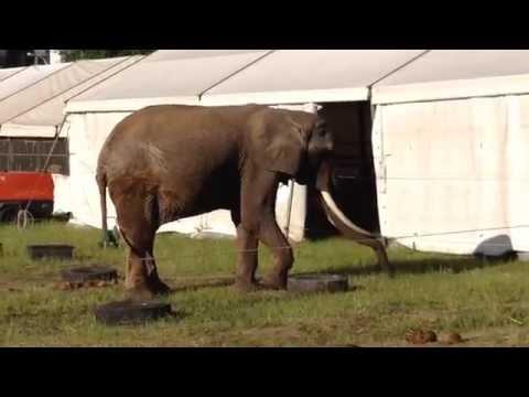 Mini Zoo na Trockiej - 16.06.2015