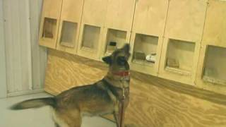 On Target- Training Substance Detector Dogs- Detection 3