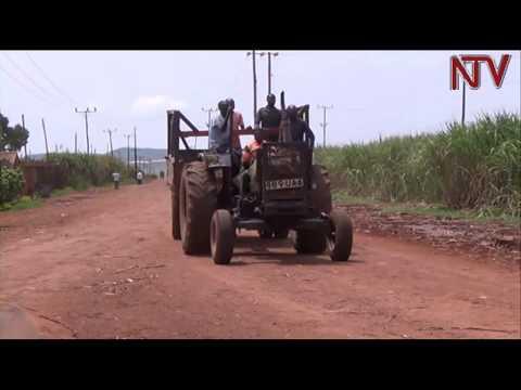 Sugarcane growers disagree on raw cane prices