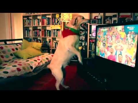 labrador dog celebrates goal (world cup 2014, Portugal vs USA)