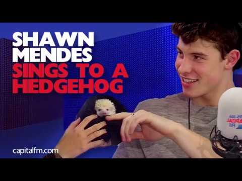 Shawn Mendes (tries to) Sing A Hedgehog To Sleep
