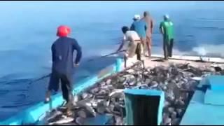 Удивительная океаническая рыбалка для ленивых