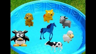 Old MacDonald Farm Animals in Pool of Water to Learn Colors