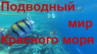Шарм-эль-Шейх 2018. Пирс отеля Charmillion Club Resort 5*. Подводный мир Красного моря