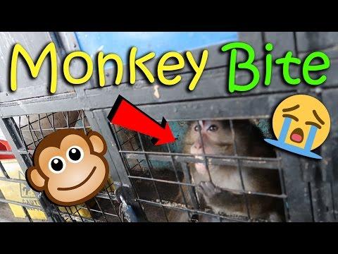 OMG! MONKEY BITE | February 26th, 2017 | Vlog #38