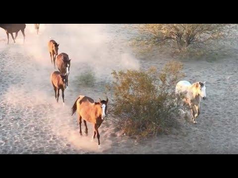 Wild Horses near Maricopa AZ