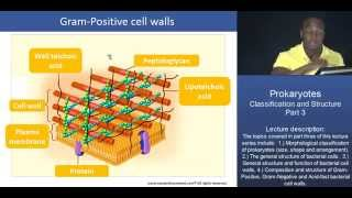 MCAT®:  Prokaryotes: Classification and Structure - Part 3 – Bacterial Cell Walls
