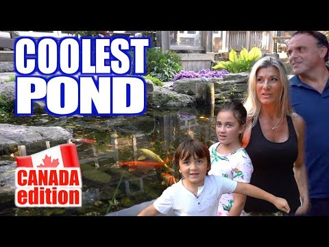 Coolest Pond In Canada!! - Greg Wittstock, The Pond Guy