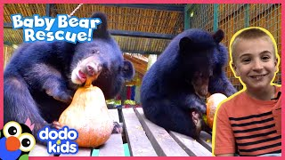 Heroes Help Save Baby Bears And Give Them Pumpkins To Eat | Animal Videos For Kids | Dodo Kids