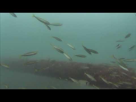 Sharks in the Atlantic Cam 05-24-2017 10:00:07 - 10:59:58