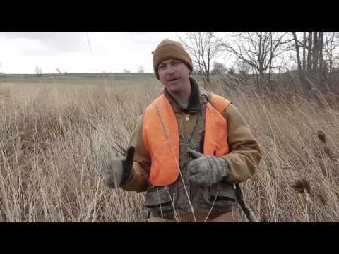 Pheasant Hunting Tips, South Dakota Pheasant Hunt 2014