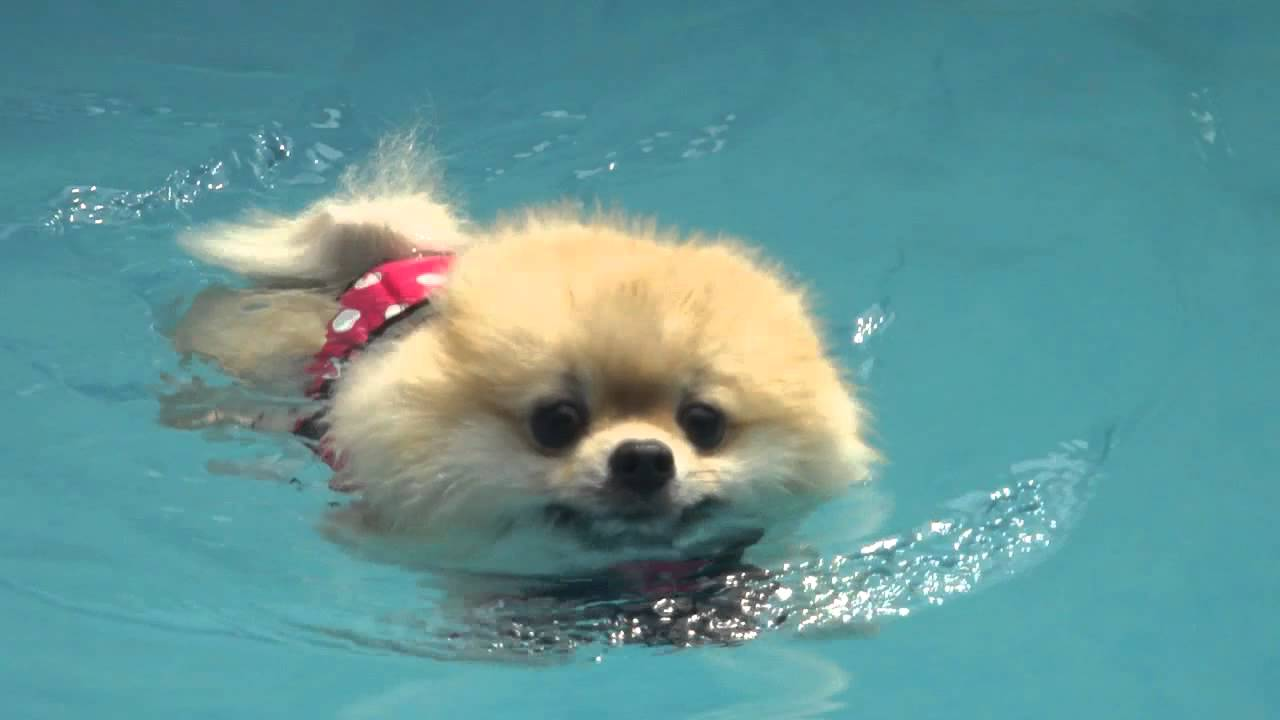 How To Get Your Dog To Like The Pool