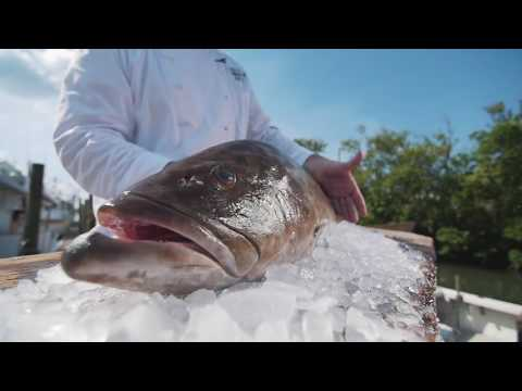 Bonefish Grill Presents Fresh Grouper