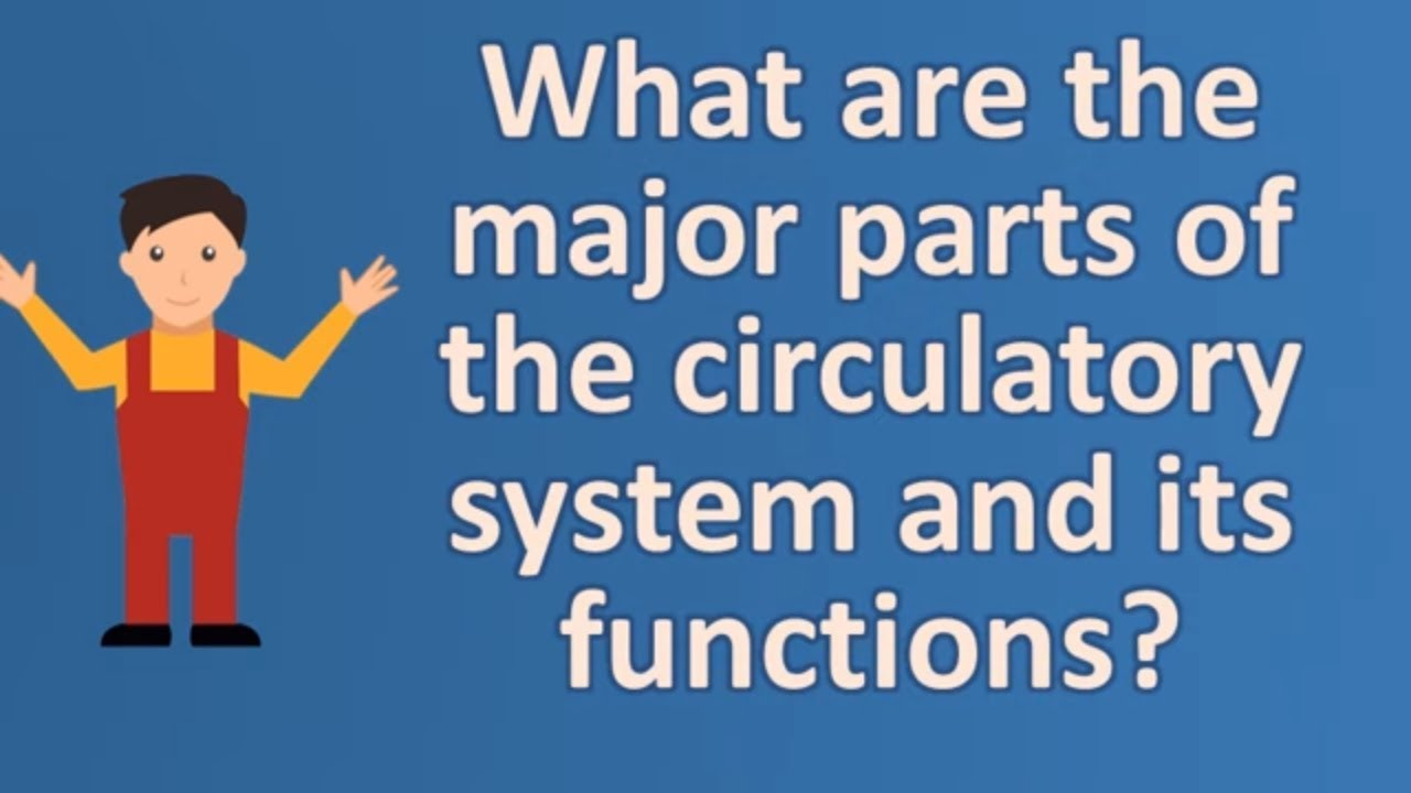 What Are The Major Parts Of The Circulatory System And Its Functions
