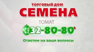 Томат Сахарная Настасья